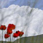 جشنواره سراسری شمیم بهار - حسین قشمی ، راه یافته به بخش حرفه ای | نگارخانه چیلیک | ChiilickGallery.com
