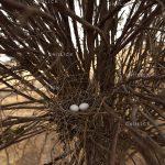 جشنواره سراسری شمیم بهار - سعید اسکندرزاده ، راه یافته به بخش حرفه ای | نگارخانه چیلیک | ChiilickGallery.com