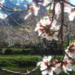 جشنواره سراسری شمیم بهار - میلاد ادوای ، راه یافته به بخش آماتور | نگارخانه چیلیک | ChiilickGallery.com