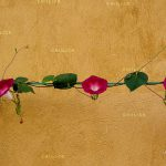 جشنواره سراسری شمیم بهار - پرستو عطرسائی ، راه یافته به بخش آماتور | نگارخانه چیلیک | ChiilickGallery.com