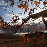کمال شب خیز عکاس ایرانی