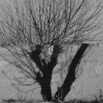 ابراهیم سیسان عکاس ایرانی