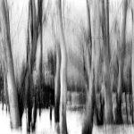 سیدحسن نصراللهی عکاس ایرانی