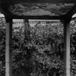 اکباتان، غرب تهران - بهنام صدیقی | نگارخانه چیلیک | ChiilickGallery.com
