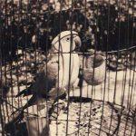 سهیلا هاشمی نژاد عکاس ایرانی