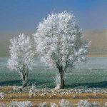 فرزاد هاشمی عکاس ایرانی
