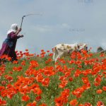 محمد گلچین کوهی عکاس ایرانی