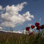 کتایون قدس راد عکاس ایرانی
