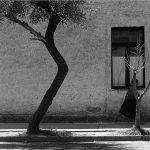 آلوارز براوو عکاس خارجی