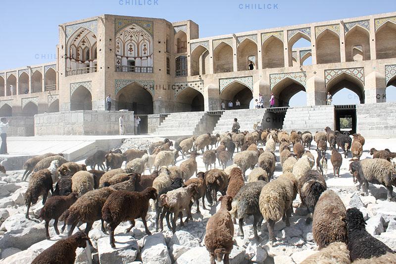 ششمین جشنواره هنری آب - حسين بهارلو ، مقام اول | نگارخانه چیلیک | ChiilickGallery.com