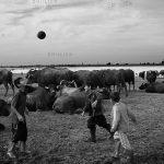 بخش جنبی جشنواره مطبوعات - بابک بردبار | نگارخانه چیلیک | chiilickgallery.com