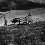 91-828محمدعلی صباغی عکاس ایرانی
