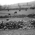 محمدعلی صباغی عکاس ایرانی