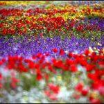 روبرت شهبازی عکاس ایرانی