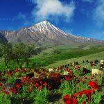 جشنواره محیط زیست مازندران - علی اصغری | نگارخانه چیلیک | ChiilickGallery.com