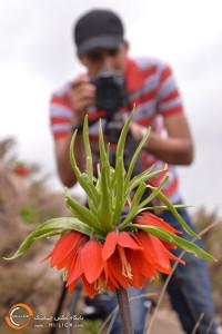 72- تور عکاسی از لاله های واژگون خوانسار | پایگاه عکس چیلیک www.chiilick.com