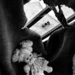دومین جشنواره گلستانه - ابراهیم کوچکی ، راه یافته به بخش الف | نگارخانه چیلیک | ChiilickGallery.com