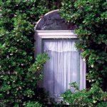 بوی بهشت - مجید کلهر | نگارخانه چیلیک | ChiilickGallery.com