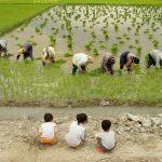 جشنواره ملی عکس تعاون - کلثوم ریاحی ، راه یافته به نمایشگاه در بخش آماتور | نگارخانه چیلیک | ChiilickGallery.com