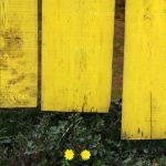 جشنواره تجسمی شهریار - مائده سرلک ، رتبه دوم | نگارخانه چیلیک | ChiilickGallery.com