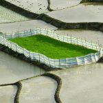 جشنواره محیط زیست مازندران - ابراهیم سیسان | نگارخانه چیلیک | ChiilickGallery.com