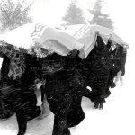 چهارمین جشنواره عکس زمان - حمید موقر ، راه یافته به بخش انقلاب اسلامی در گذر زمان | نگارخانه چیلیک | ChiilickGallery.com
