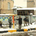 جشنواره ملی عکس تعاون - حوری (کلثوم) ملتی ، راه یافته به نمایشگاه در بخش آماتور | نگارخانه چیلیک | ChiilickGallery.com