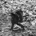 دومین جشنواره گلستانه - سیدمرتضی جعفری ، راه یافته به بخش الف | نگارخانه چیلیک | ChiilickGallery.com