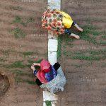 جشنواره ملی عکس تعاون - ناصر محمدی ، رتبه اول در بخش حرفه ای | نگارخانه چیلیک | ChiilickGallery.com