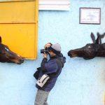 نخستین نمایشگاه صنعت اسب - زهرا استادزاده ، رتبه چهارم | نگارخانه چیلیک | ChiilickGallery.com