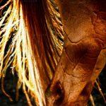نخستین نمایشگاه صنعت اسب - سیدعلیرضا دامادزاده | نگارخانه چیلیک | ChiilickGallery.com