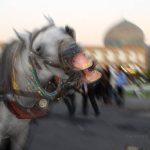 نخستین نمایشگاه صنعت اسب - قدیر وقاری شورچه | نگارخانه چیلیک | ChiilickGallery.com