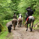 نخستین نمایشگاه صنعت اسب - محمد قدم خیر | نگارخانه چیلیک | ChiilickGallery.com