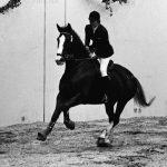 نخستین نمایشگاه صنعت اسب - محمد بهرامی ، شرکت کننده بخش ویژه؛ پیشکسوت عکاسی مسابقات سوارکاری و چوگان | نگارخانه چیلیک | ChiilickGallery.com