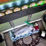 پنجمین جشنواره عکس زمان - علی حسنعلی زاده ، راه یافته به بخش الف | نگارخانه چیلیک | ChiilickGallery.com