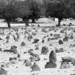 پنجمین جشنواره عکس زمان - حسين تهوري ، راه یافته به بخش ب | نگارخانه چیلیک | ChiilickGallery.com