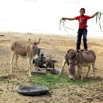 نمایشگاه سالانه انجمن عکاسان مطبوعات - مهدی حاجی وند | نگارخانه چیلیک | ChiilickGallery.com