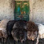 محمدرضا چایفروش اسماعیلی عکاس ایرانی
