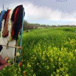 محسن زین العابدینی عکاس ایرانی
