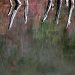 تور عکاسی از دریاچه چورت - عکاس: آزیتا قاسمی