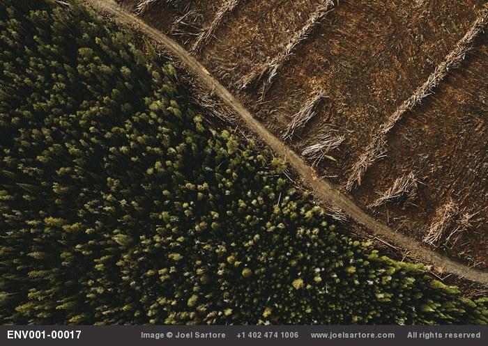 Logging near Salmon, Idaho. (Image ID: ENV001-00017)