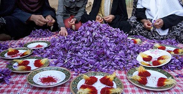 امیر قادری جشنواره تعاون
