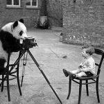 برت هاردی عکاس انگلیسی