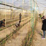 عکاسان بوشهری در حال عکاسی از شركت تعاونى كشاورزى و گلخانه ى كوثر در شهر كاكى - عکاس: سید محمد فاطمی
