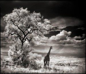 آشنایی با ژانر عکاسان پیشگام
