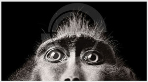 آشنایی با عکاسان پیشگام جهان : تام فلک