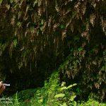 کارگاه عکاسی طبیعت | عکاس: ریحانه خداویسی