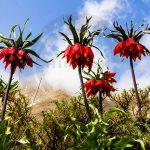 نگاه برتر تور عکاسی چیلیک | گلستان کوه خوانسار | عکاس: حسین عصاری آرانی