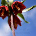 نگاه برتر تور عکاسی چیلیک | گلستان کوه خوانسار | عکاس: وحید قلی بیگی