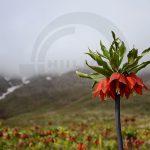 نگاه برتر تور عکاسی چیلیک | گلستان کوه خوانسار | عکاس: طاهره حیدری